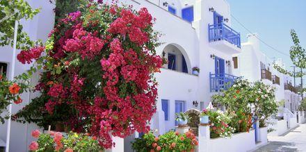 Agia Anna, Agios Prokopios & Plaka Beach