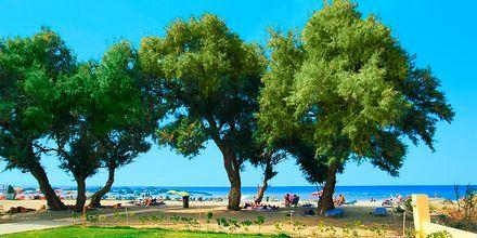 Hotelli Akti Chara, Rethymnon, Kreeta, Kreikka.