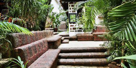 Alidia Beach Resort, Pohjois-Goa, Intia.