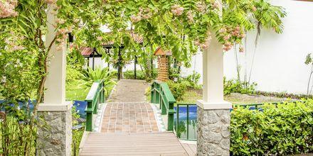Puutarha, hotelli Amora Beach Resort. Bangtao Beach, Phuket.