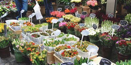 Amsterdam ja Hollanti ovat tunnettuja tulppaaneistaan. Tulppaanimarkkinoilta voit ostaa kotiin myös tulppanien sipuleita.