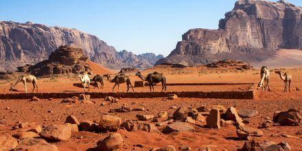 Retki Wadi Rumin aavikolle. Aqaba, Jordania.