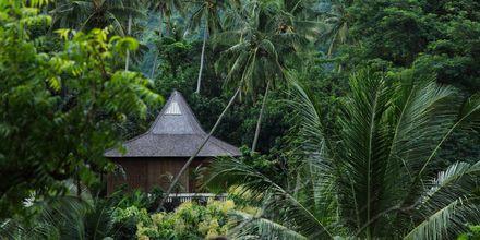 Balin kaunis luonto tekee siitä upean matkakohteen ympäri vuoden. Bali, Indonesia.