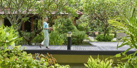 Apollomatkojen hotelli Dusit Thani Laguna Phuket, Bangtao Beach.