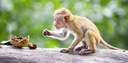 Sri Lankassa on useita kansallispuistoja.