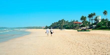 Ranta. Bentota, Sri Lanka.