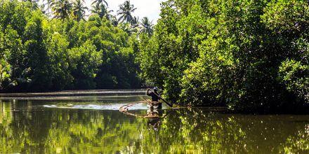 Järvi. Bentota, Sri Lanka.