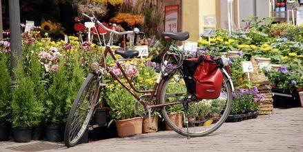 Kukkakoju Berliinissä