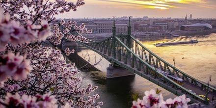 Ketjusilta, joka jakaa Budapestin Budan ja Pestin alueisiin.