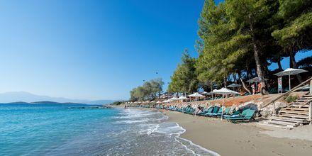 Hotellin ranta on saanut EU:n sinisen lipun puhtaasta vedestään. Hotelli Candia Park Village, Kreeta, Kreikka.