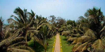 Chalston Beach Resort, Pohjois-Goa, Intia.