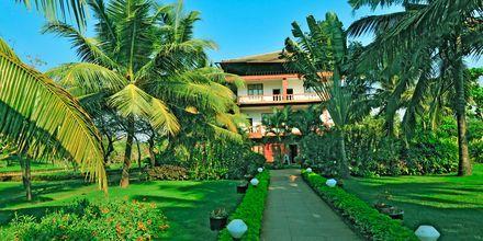 Puutarha, Chalston Beach Resort, Pohjois-Goa, Intia.
