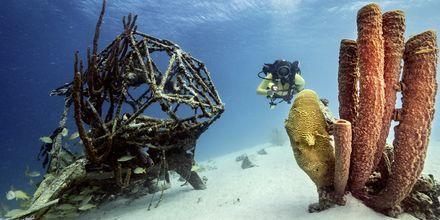 Curaçao on yksi maailman parhaista sukelluskohteista.