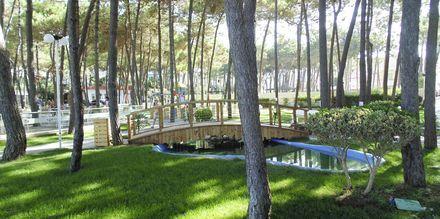 Hotellin puutarha. Hotelli Diamma Resort, Durres Riviera, Albania.