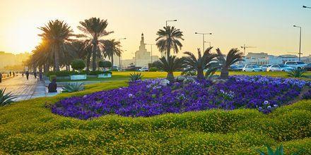 Istutuksia Dohan rantakadulla, Qatar.