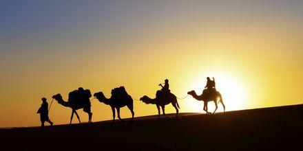 Auringonlasku aavikolla. Dubai, Arabiemiraatit.