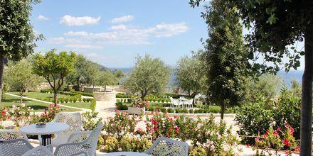 Puutarha. Hotelli Elysium, Dhermi, Albania.