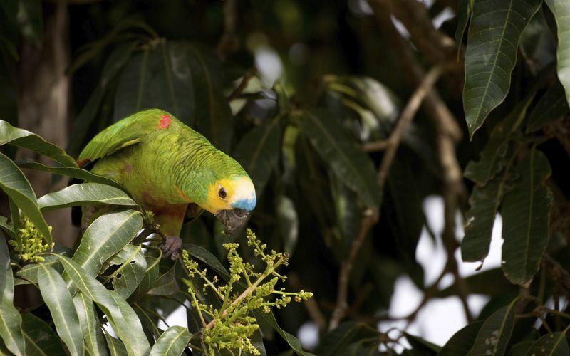Etelä-Amerikka