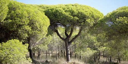 Faron ja Algarven rannikon luonto on upeaa.
