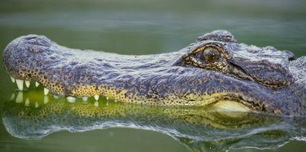 Näe Alligaattoreita Ervergladesussa
