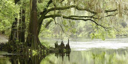 Everglades, Florida.