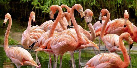 Kauniita Flamingoja