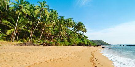 Goan rantaa, Intia