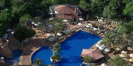 Uima-allas, Habtoor Grand Resort, Autograph Collection, Dubai Jumeirah Beach, Yhdistyneet Arabiemiraatit.