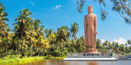 Buddha-patsas. Hikkaduwa, Sri Lanka.