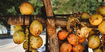 Kookospähkinöitä. Hikkaduwa, Sri Lanka.