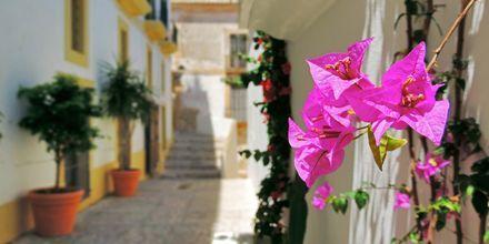 Vehreät ja kauniit pikkukadut ovat tyypillisiä Ibizalla.