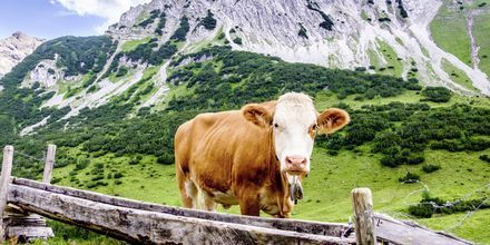 Vaeltaessasi Itävallassa törmäät varmasti moniin erilaisiin tuttavuuksiin.