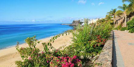 Jandia, Fuerteventura.