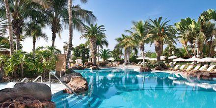 Allasalue, hotelli Jardines De Nivaria. Costa Adeje, Teneriffa.