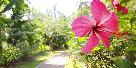 Hotelli Krabi Tipa Resort, Ao Nang, Thaimaa.