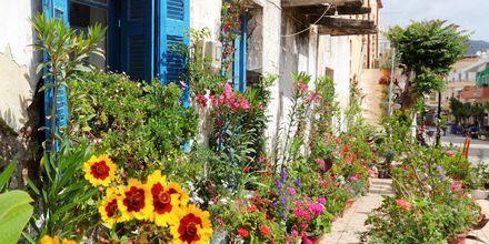 Kauniita kukkia Paloechoran pääkadulla Kreetalla.