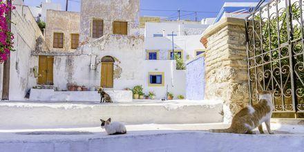 Leroksen arkkitehtuuria. Leros, Kreikka.