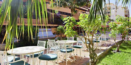 Kahvila, Los Alisios, Los Cristianos, Teneriffa.