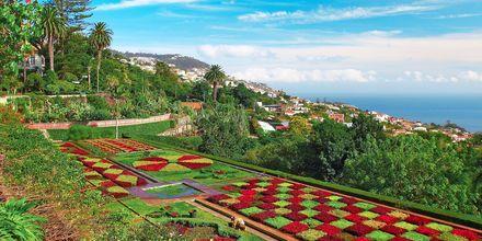 Kasvitieteellinen puutarha, Funchalissa.