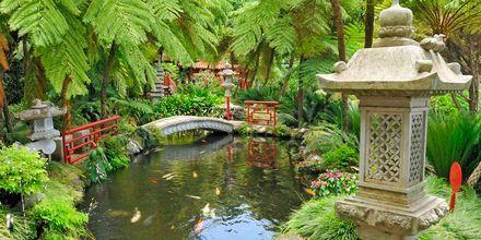 Japanilainen puutarha, Funchal, Madeira.