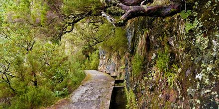 Levada, Madeira.