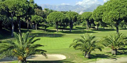 Golfia Marbellassa.