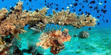 Malediivit
