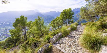 Monet vaeltajat suuntaavat Tramuntanan vuoristolle Mallorcan länsipuolelle.