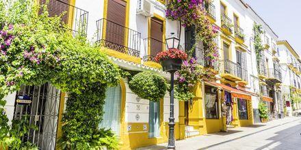 Valkeat talot ja värikkäät kukat ovat tavallinen näky Marbellan kaduilla.