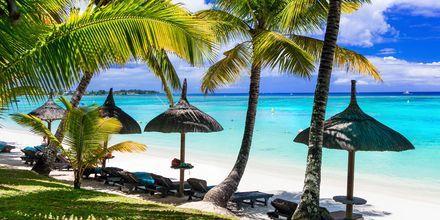 Huojuvien palmujen varjossa voit nauttia rantapäivistä Mauritiuksella.