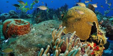 Sukellusta Cozumelilla
