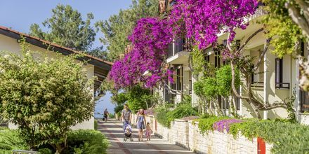 Perhehuone. Hotelli Melas Holiday Village, Side, Turkki.