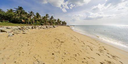 Negombon ranta. Sri Lanka.
