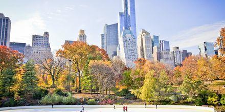 Luistelurata Central Parkissa.